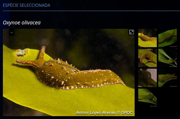 Species photo gallery